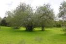 Algarve land for sale Tavira, Tavira