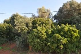 Algarve                 Plot                 for sale                 Monte Canelas,                 Portimão