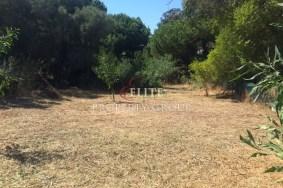 Algarve                 Land                  te koop                  Quinta da Balaia,                  Albufeira