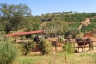 Algarve commercial property for sale Pinheiro e Garrado, Silves